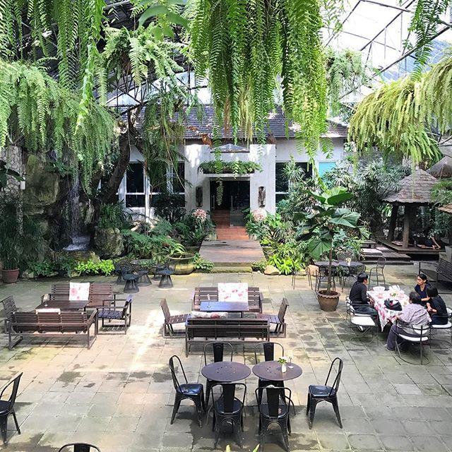 先週のお話ですが…タイに研修旅行に行ってきました。・植物好きとしては植物天国のタイは行ってみたい所がたくさんあります。・昨年はチャトチャック市場の植木市へ、今回は「Bankampu Tropical Gallery & Cafe」へ行ってきました。・写真ではあまり伝わらないですが、やはり植物天国タイはスケールが違います。・#BankampuTropicalGallery#tailand#plants#cafe#trip